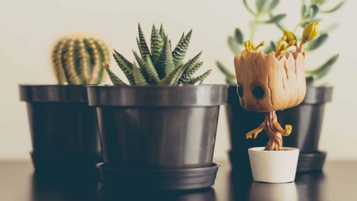 Plantas que precisam de pouca luz e cuidados para seu apartamento!