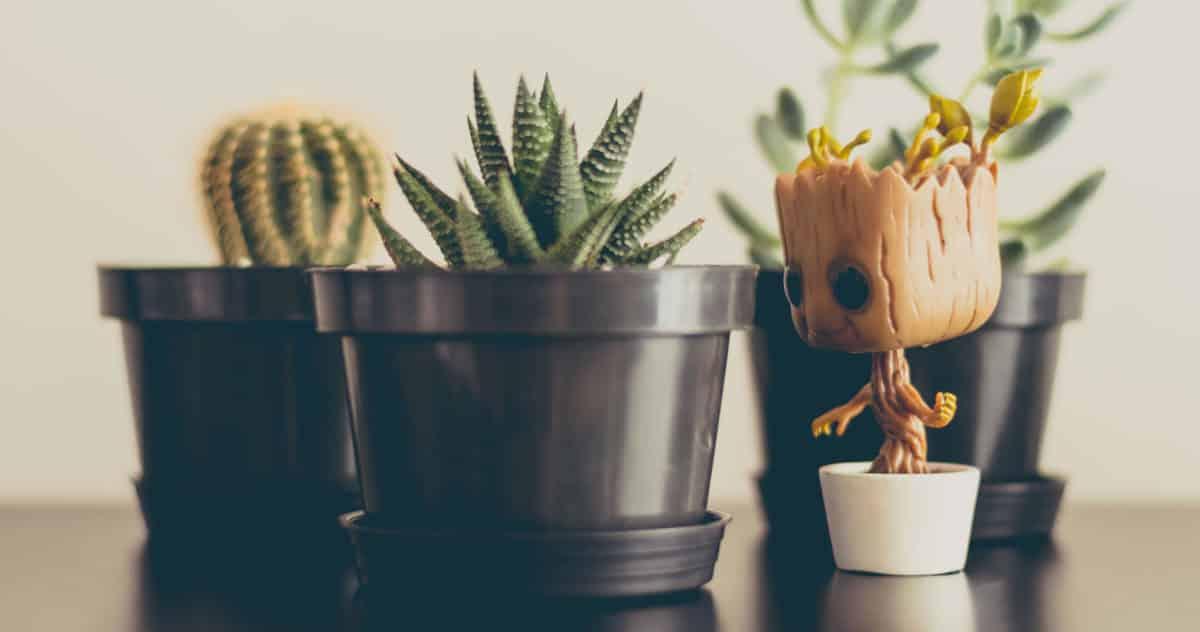 Plantas que precisam de pouca luz e cuidados para decorar seu apartamento